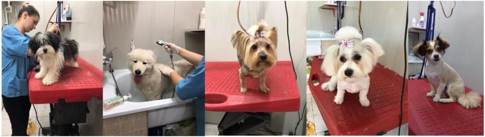 salon frizerie cosmetica canina craiova