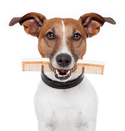 frizerie cosmetica canina iasi