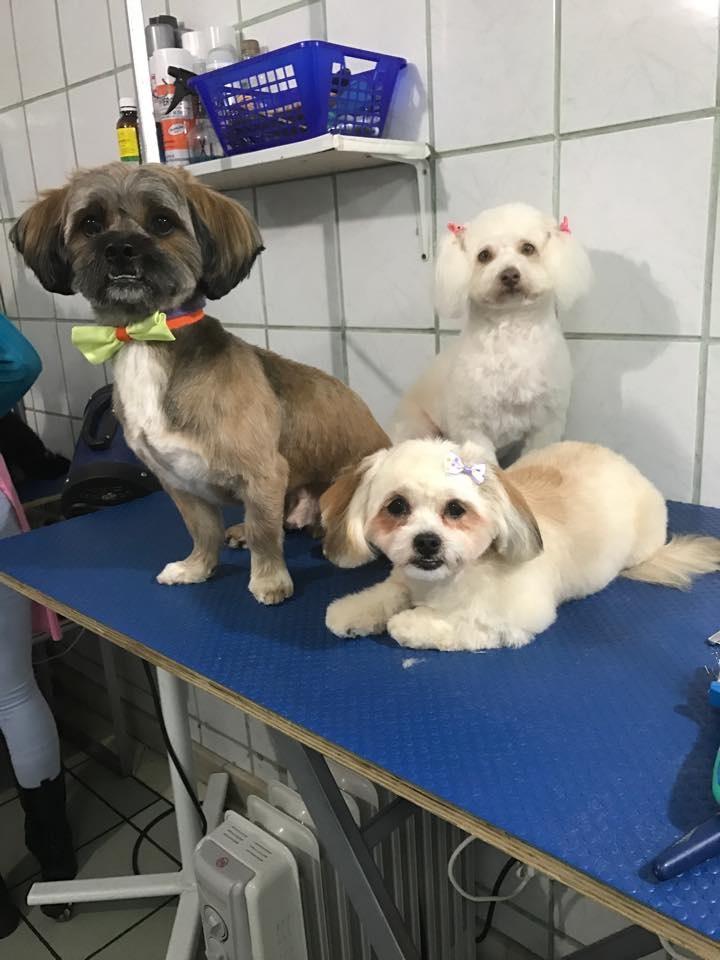 Salon Frizerie Canina Piatra Neamt