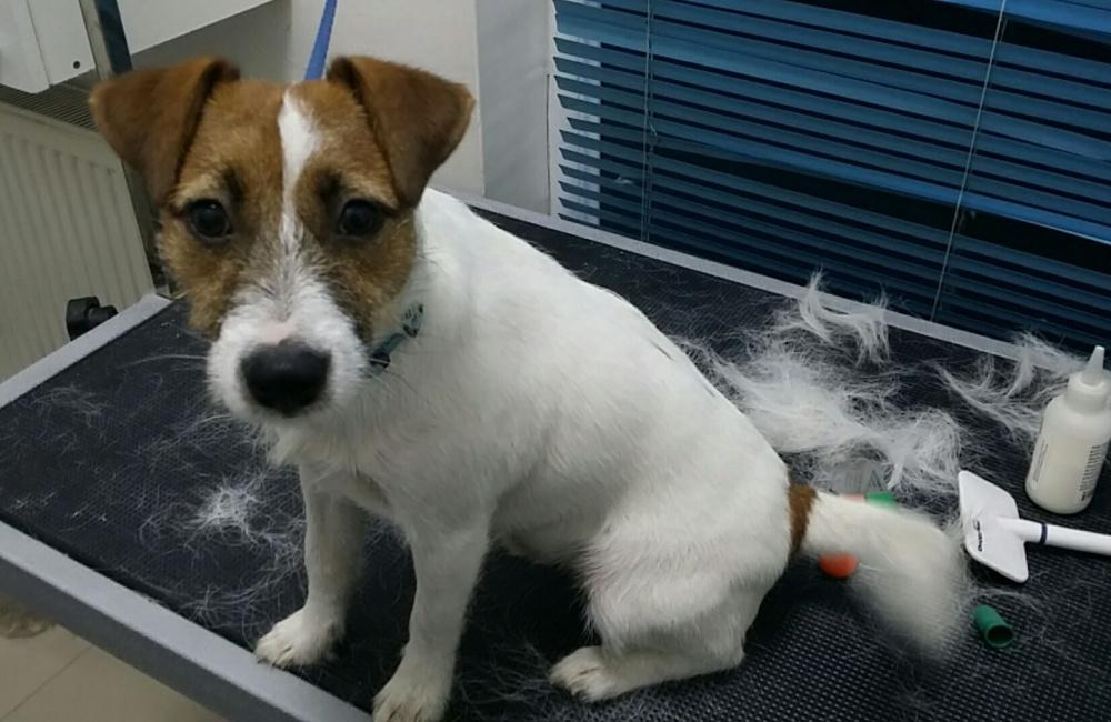 frizerie canina floresti