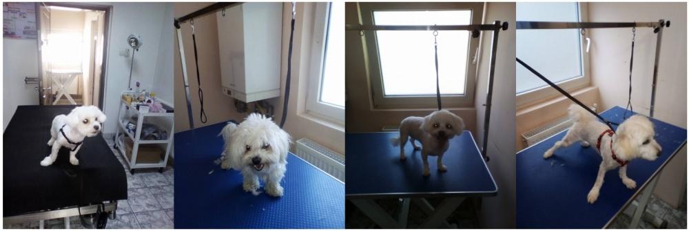 salon cosmetica frizerie canina timisoara