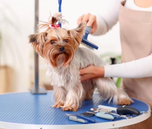 salon frizerie cosmetica canina timisoara