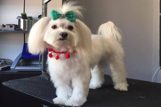Salon Frizerie Canina Bucuresti