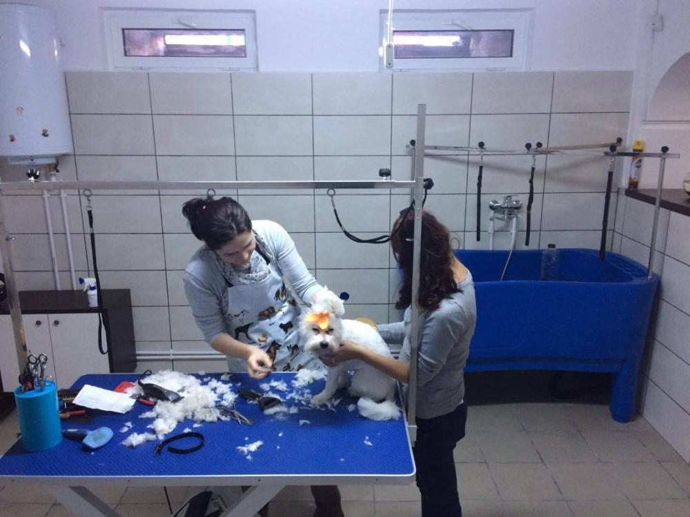 Salon Frizerie Canina si Felina Drobeta