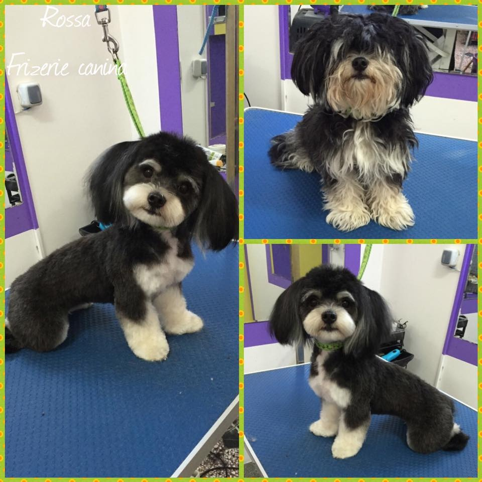 Salon Frizerie Canina Braila