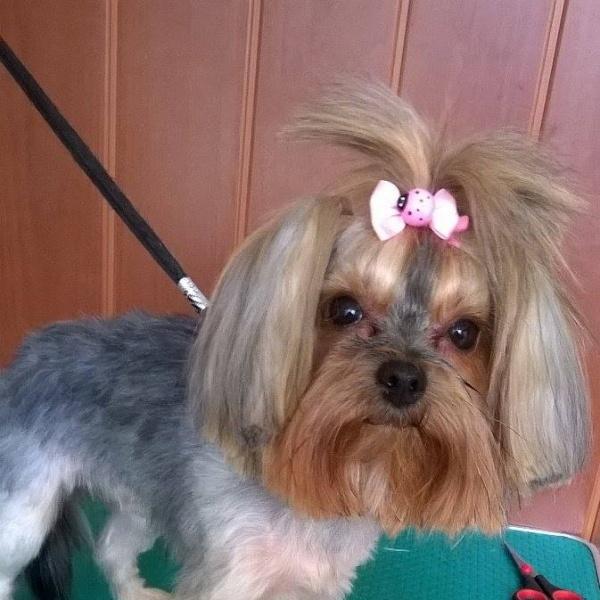 frizerie cosmetica canina targoviste