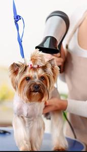 salon frizerie cosmetica canina felina resita