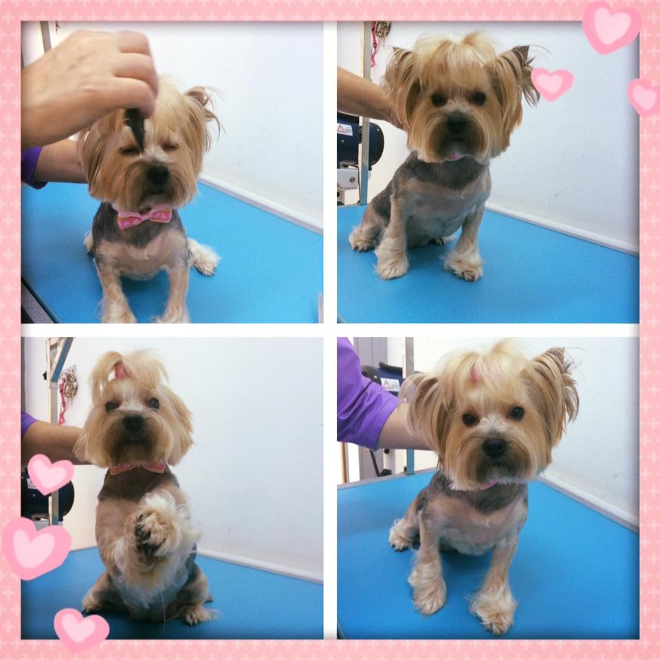 Salon Frizerie Canina Sector 5