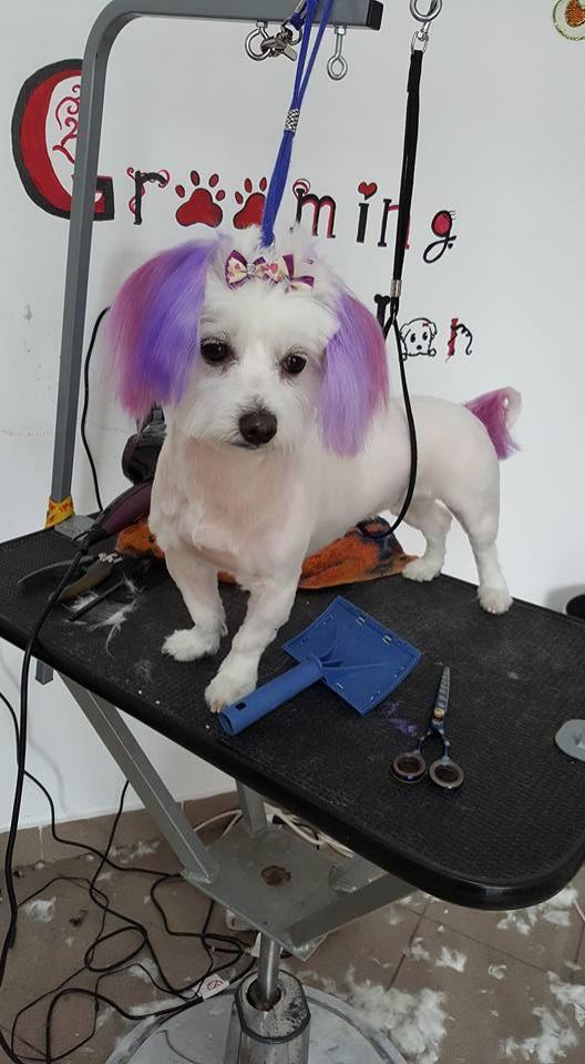 frizerie cosmetica canina zalau